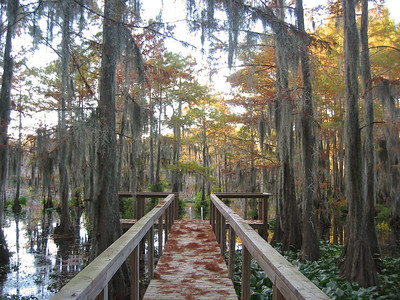 2003 Lake Bistineau, Louisiana (8)