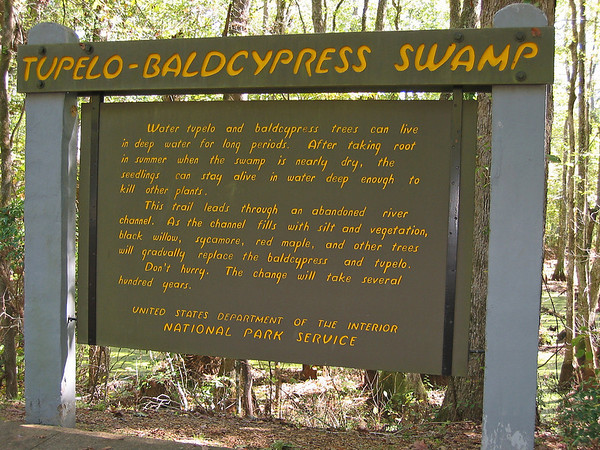 Cypress Swamp Natchez Trace Parkway, Mississippi (20)