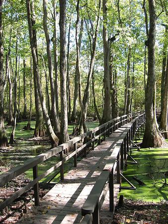 Cypress Swamp Natchez Trace Parkway, Mississippi (21)