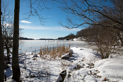 The Nature Center's Peacefulness - January 2019
