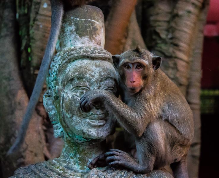 Cambodian Monkey  - Wat Leu, Sihanoukville, Cambodia