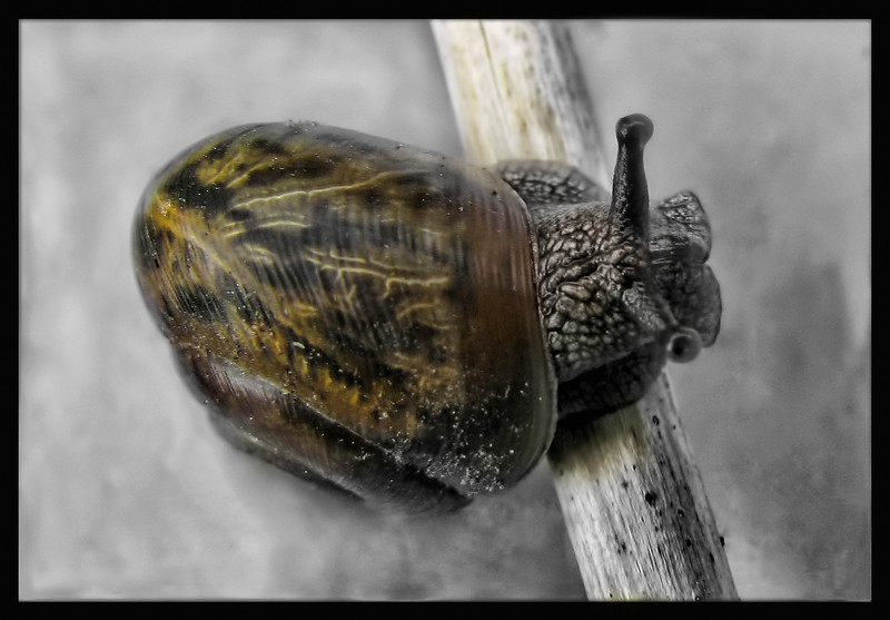 Close-up of a young snail