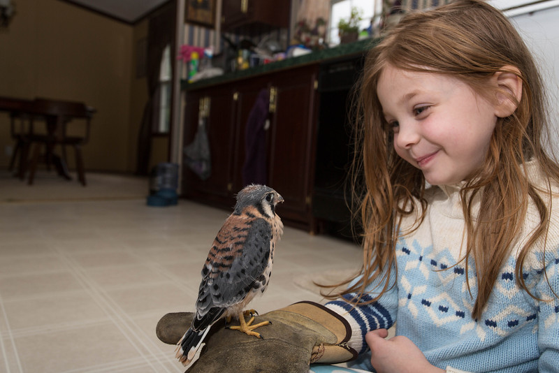 The RR had said to bring him in to see if his wings seemed intact. My Daughter was very happy to help.