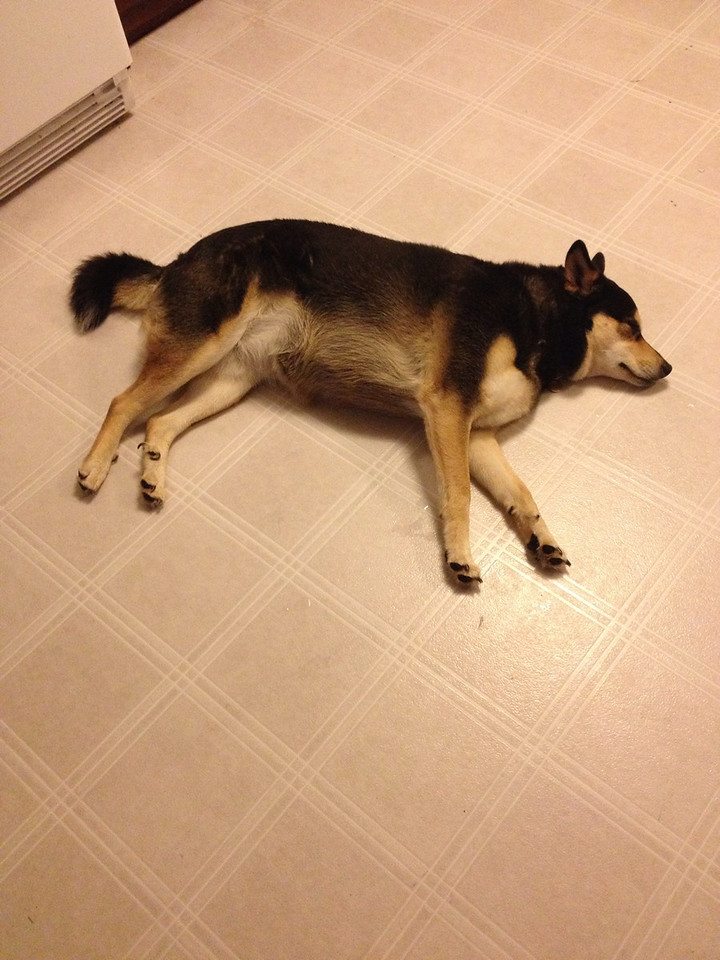 She tends to pass out in the kitchen floor quite often.