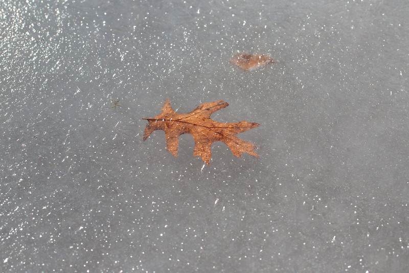 A leaf frozen solid upon decent into the icy depths...