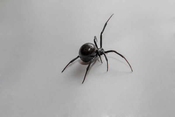 Much like a daddy-long-leg spider, she had one arm that she used to 'feel' before proceeding. She never once ran fast. All movement was lazy and deliberate.