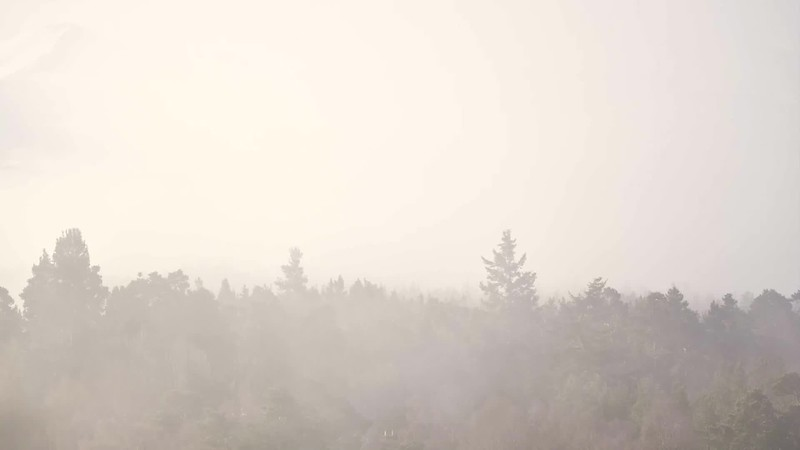 Forest breathing (and smoking) - Abernethy, Scotland