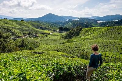 Cameron Highlands, Malaisie