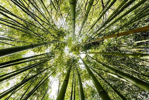 Bambouseraie (Format 3:2 Disponible 28/30)