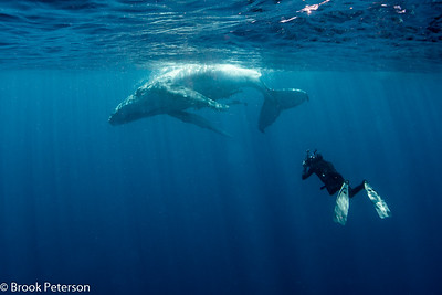 Diver and Baby Whale