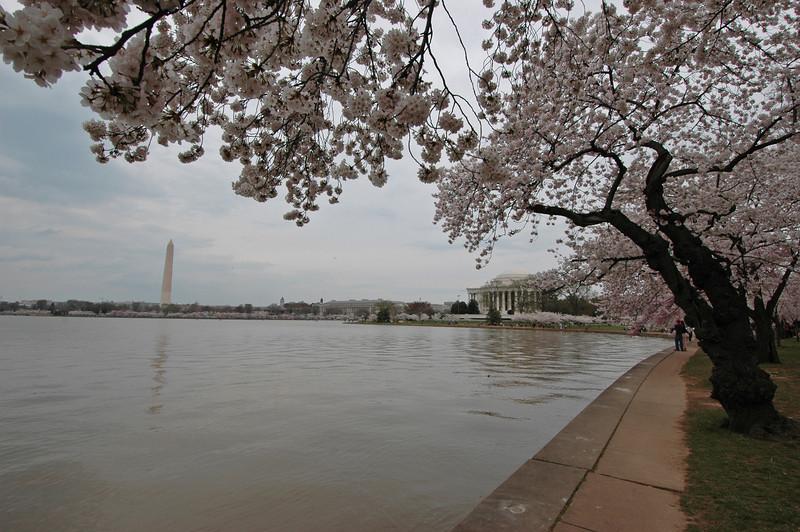 050407 2697 USA - Washington DC - Cherry Blossoms _D _E _I ~E ~L