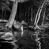 The boys canoe on Osprey Island