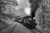Cass Scenic Railroad State Park 1/ 125s, at f/6.7 || E.Comp:0 || 70mm || WB: CLOUDY 0. || ISO: 1600 || Tone:  || Sharp:  || Camera: NIKON D700on: 2013:05:19 11:25:47