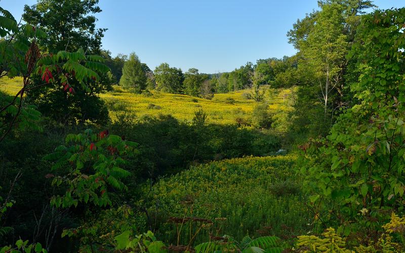 Along Dutch Hill Road near Fillmore.  Nikon D600 and 16-35mm lens (September 2014).