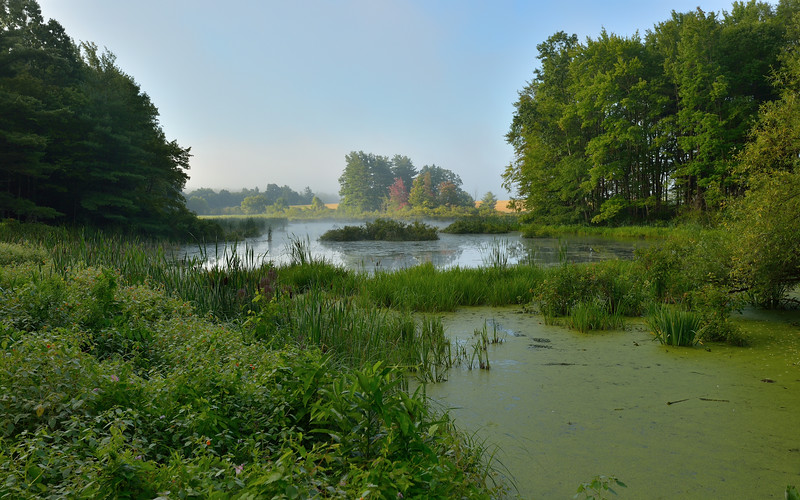 Fog off the river wafts over the swamp next to Route 436 near Portageville.  Nikon D600 and 16-35mm lens (August 2014).