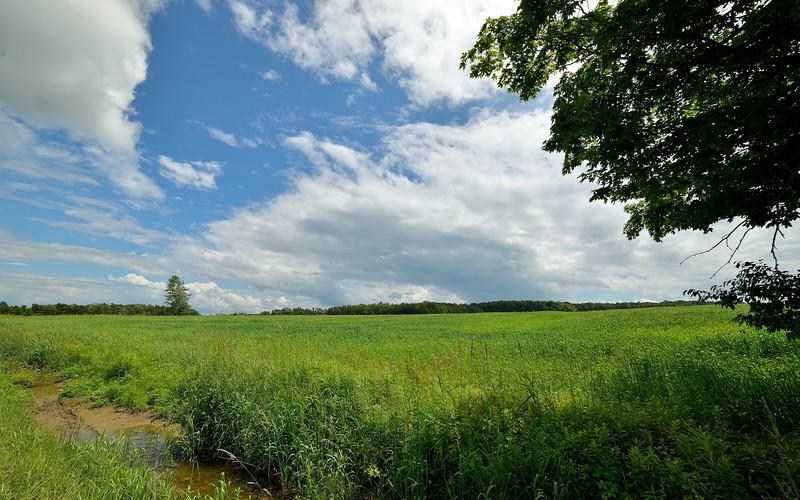 After a summer shower, on the hill above Hunts.  Nikon D600 and Samyang 14mm lens (July 2013)