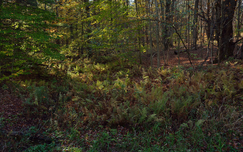 In Gillies Hill State Forest.  Nikon D600 and 28-105mm AF-D lens (October 2013).
