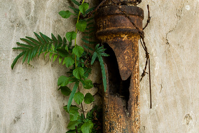 Pipe and Fern