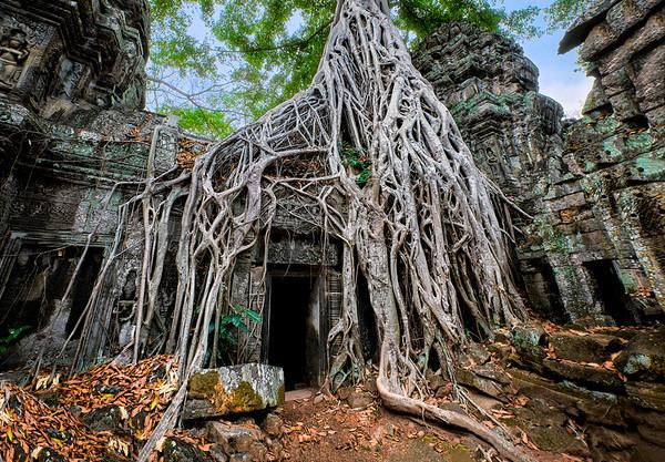Roots Eternal
