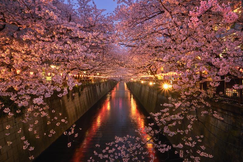 Down the Meguro River