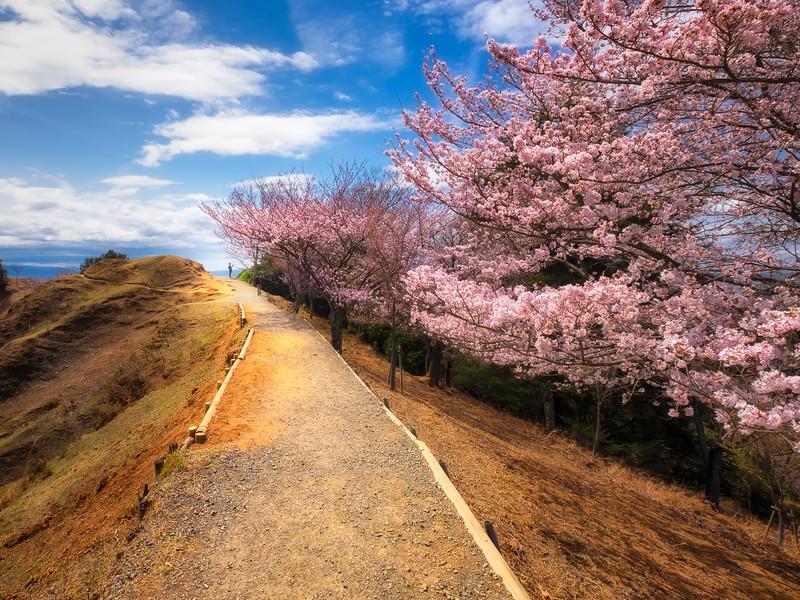 A Stroll in Spring