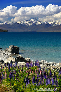 © 2007 Colleen M. Griffith. All Rights Reserved.  This material may not be published, broadcast, modified, or redistributed in any way without written agreement with the creator.  This image is registered with the US Copyright Office. Lake Tekapo and the Glodley Peaks, New Zealand