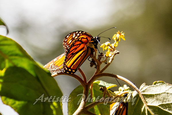 Sengio Butterfly Sanctuary