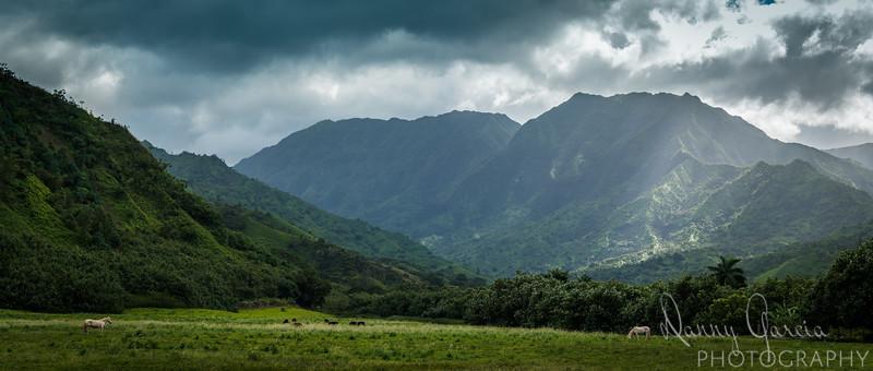 Horses in the Hawaiian Mountains