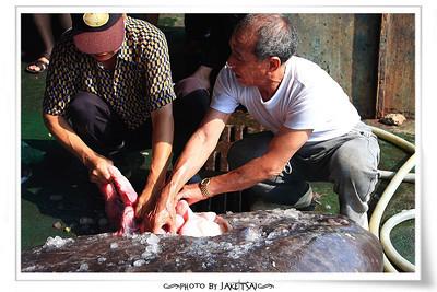 處理曼波魚