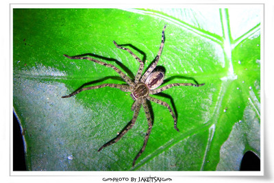 夜觀行程 亂拍蜘蛛