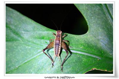 夜觀行程 亂拍昆蟲