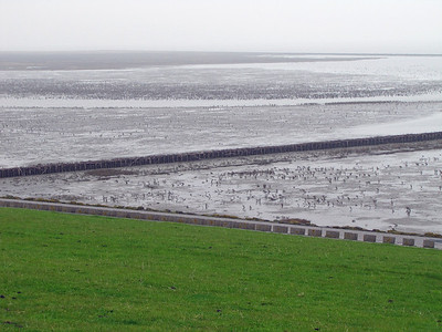 WATTENMEER National Park, North Sea (7)
