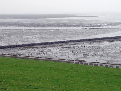 WATTENMEER National Park, North Sea (7)