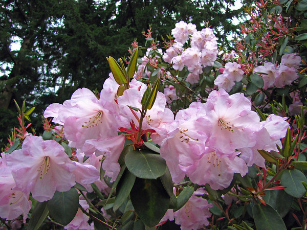 Rhododendron Park (6)