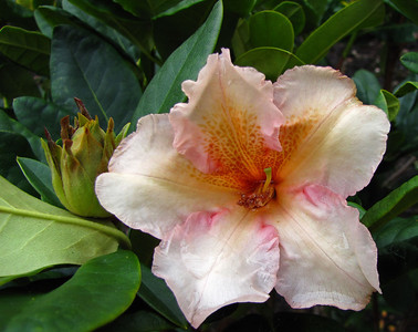 Rhododendron Park (20)