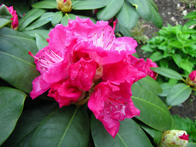 Rhododendron Park (8)