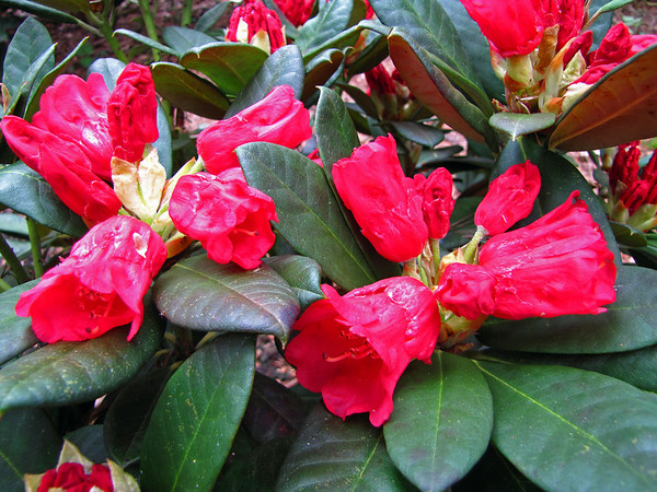 Rhododendron Park (15)