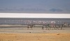 salt flat in Ngorongoro Crater