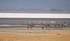 salt flat in Ngorongoro Crater
