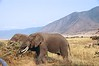 DSC_5698 Ngorongoro Crater