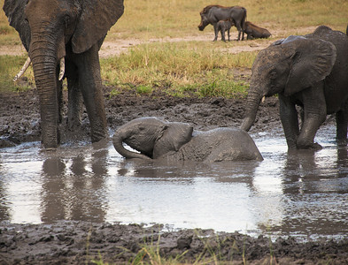 The mud protects their delicate skin from the sun and insects