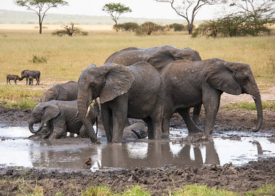 See the baby under the legs of the adults. They are so gentle to the babies