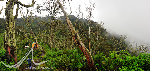 Camp 1 on the Kilembe Trail, with mists - and torrential rain - moving in quickly.