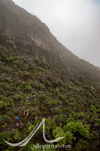 In strange countryside climbing toward Bamwanjara Pass on the Kilembe Trail, Rwenzori Mountains, Uganda.