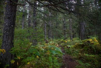 Bear Lake Trail IMG_9069