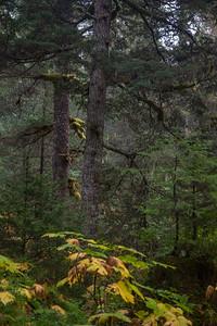 Bear Lake Trail IMG_9085