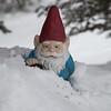 Snow Gnome IMG_4558