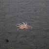 Homer, AK Octopus IMG_5148