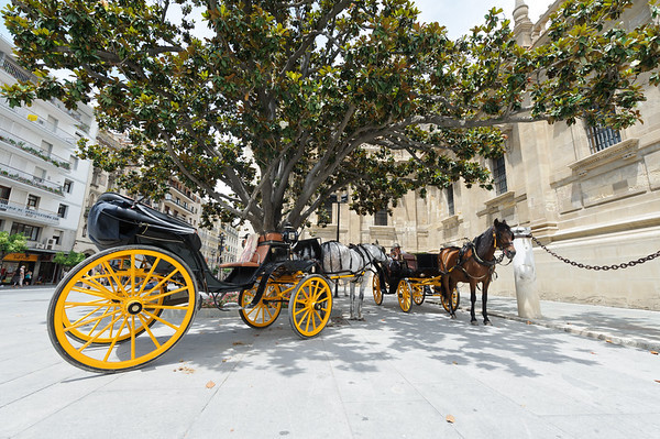 horse carriage near Cathedral of Sevilla