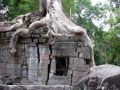jungle trees climbing temple structures, Angkor